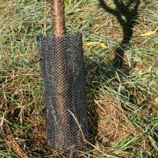 plastic mesh tree guard, Alan Eaton