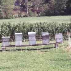 Electric fence protecting bee yard
