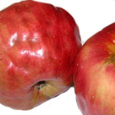 BMSB injury to apple (photo: Tracy Leskey, USDA ARS)