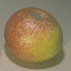 Russetting on fruit from powdery mildew.