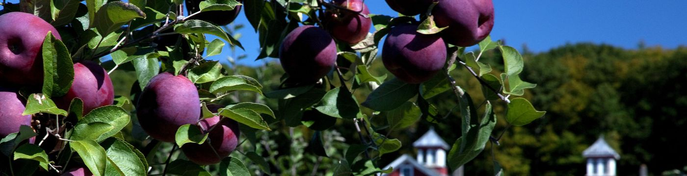 Apple trees and Cold Spring Orchard